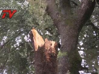 Tragedia sfiorata ad Assisi, albero cade vicino ad una donna in via Umberto I