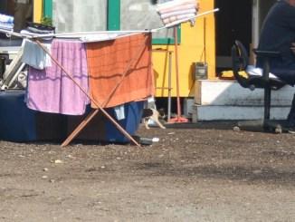 Campi rom Lega deposita proposta di legge, Mancini e Fiorini Dalle parole ai fatti