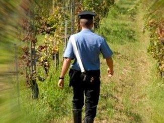 Caporalato, operazione Agri Jobs Carabinieri arrestano straniero in Umbria