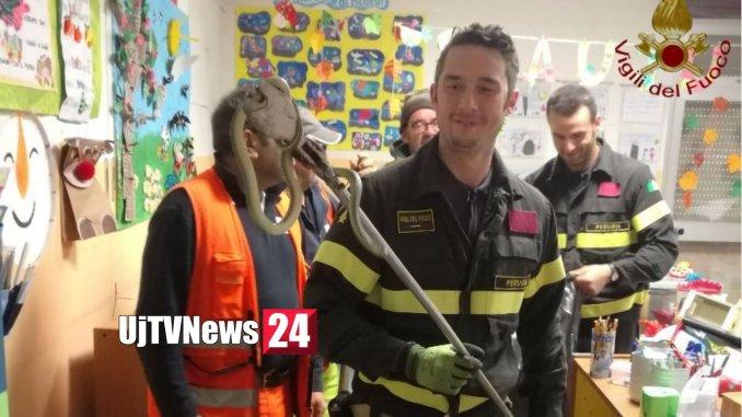 Vigili del fuoco catturano un serpente nella scuola materna di Castel del Piano