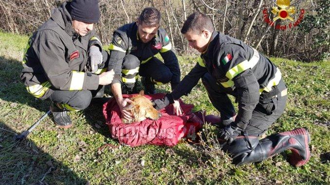 Vigili del fuoco salvano un cane a San Valentino della Collina di Marsciano [FOTO]