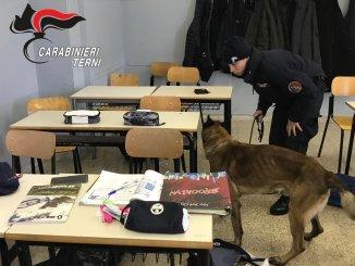 Droga nelle scuole, cinofili dei carabinieri trovano spinello a 17enne