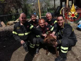 Cane sepolto da piccola frana, salvato dai Vigili del fuoco