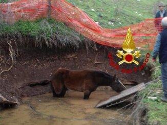 Cavallo cade in cisterna di 2 metri, recuperato dai vigili del fuoco