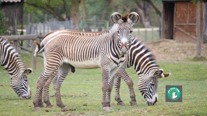 Degustazioni, domenica 26 maggio, tra zebre e dromedari