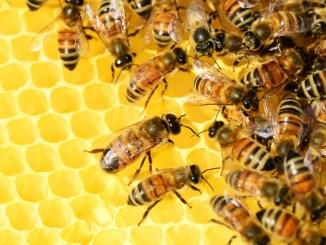 Miele amaro, la Regione Umbria finanzia apicoltori e coltivatori palestinesi