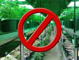 Vendita Cannabis light a Terni, Prefettura, polizia controllerà