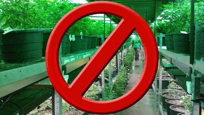 Commercializzazione della cannabis e direttive del Ministero dell'interno