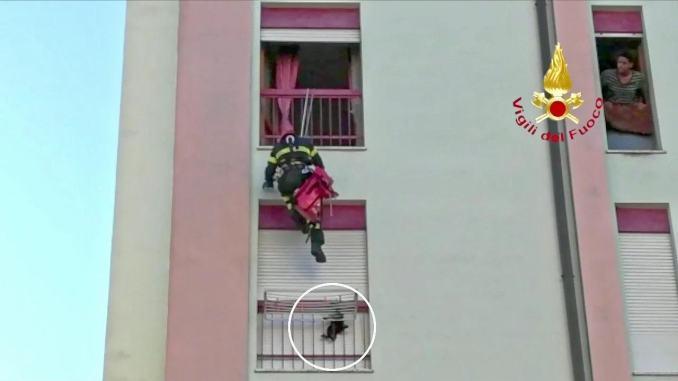 Gattino precipita dal sesto piano, stendino e vigili del fuoco lo salvano