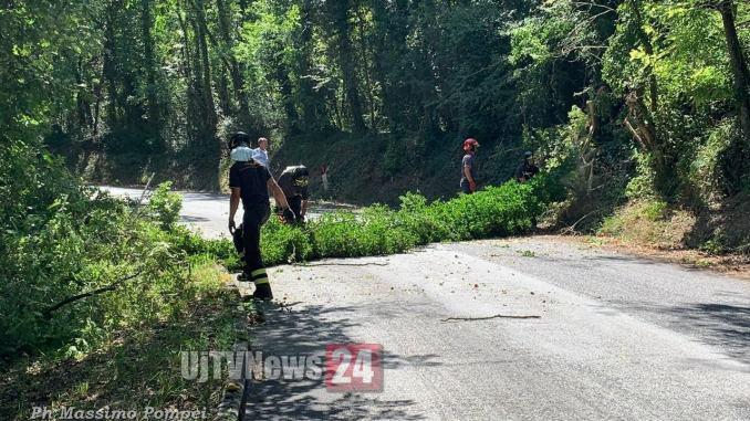 Alberi schiantati in strada a Cordigliano, due a distanza di pochi metri