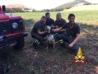 Cane nei guai in una scarpata, portato in salvo dai Vigili del fuoco