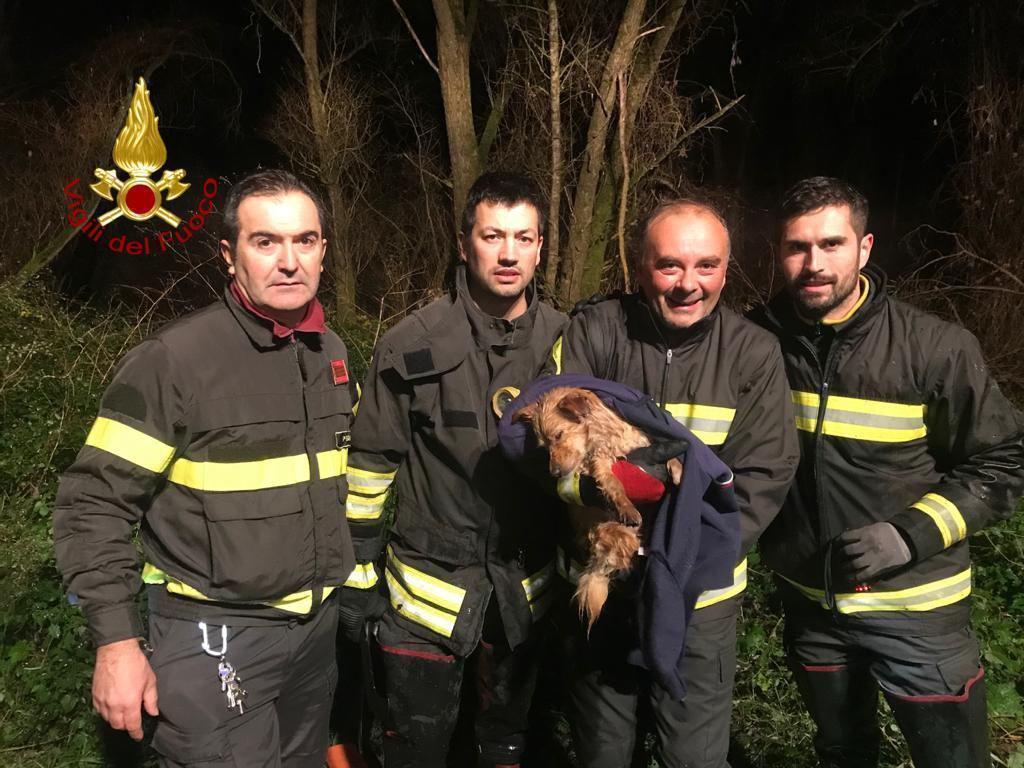 Cane finisce in una palude, recuperato e salvato dai vigili del fuoco