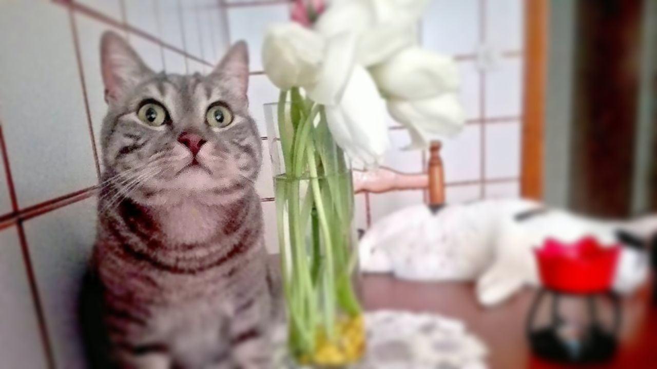 Perugia città petfriendly approvato odg, a misura di animale, di Cristina Morbello