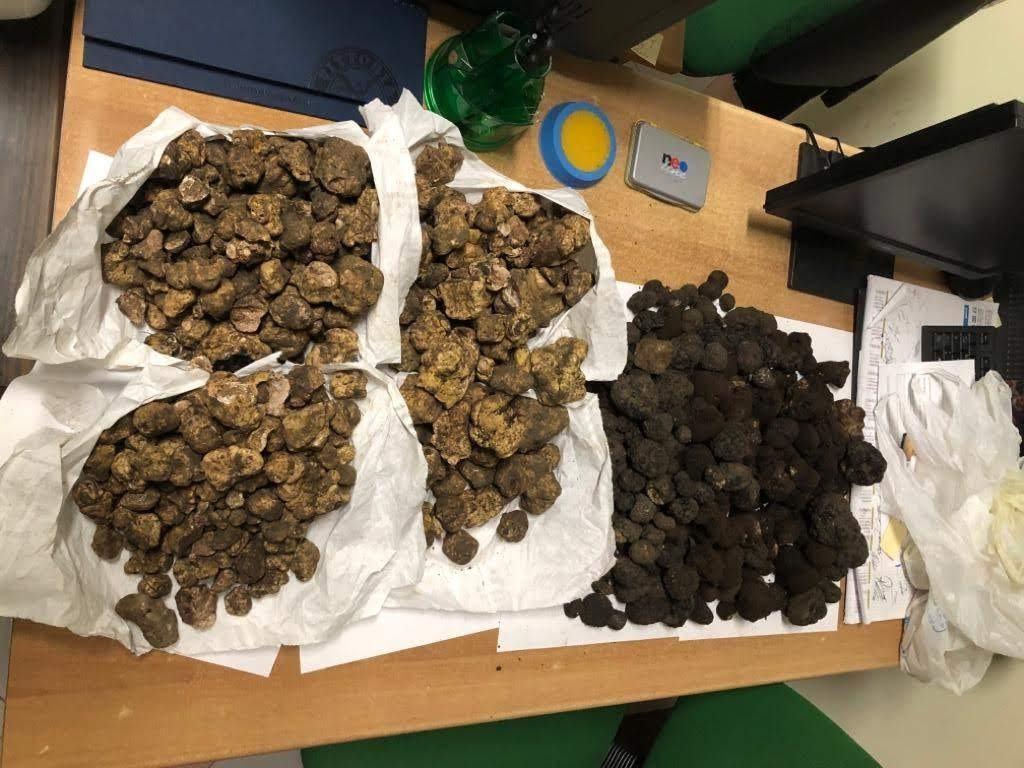 Sequestrati 145 kg di tartufo nero mal conservato diretto in Umbria