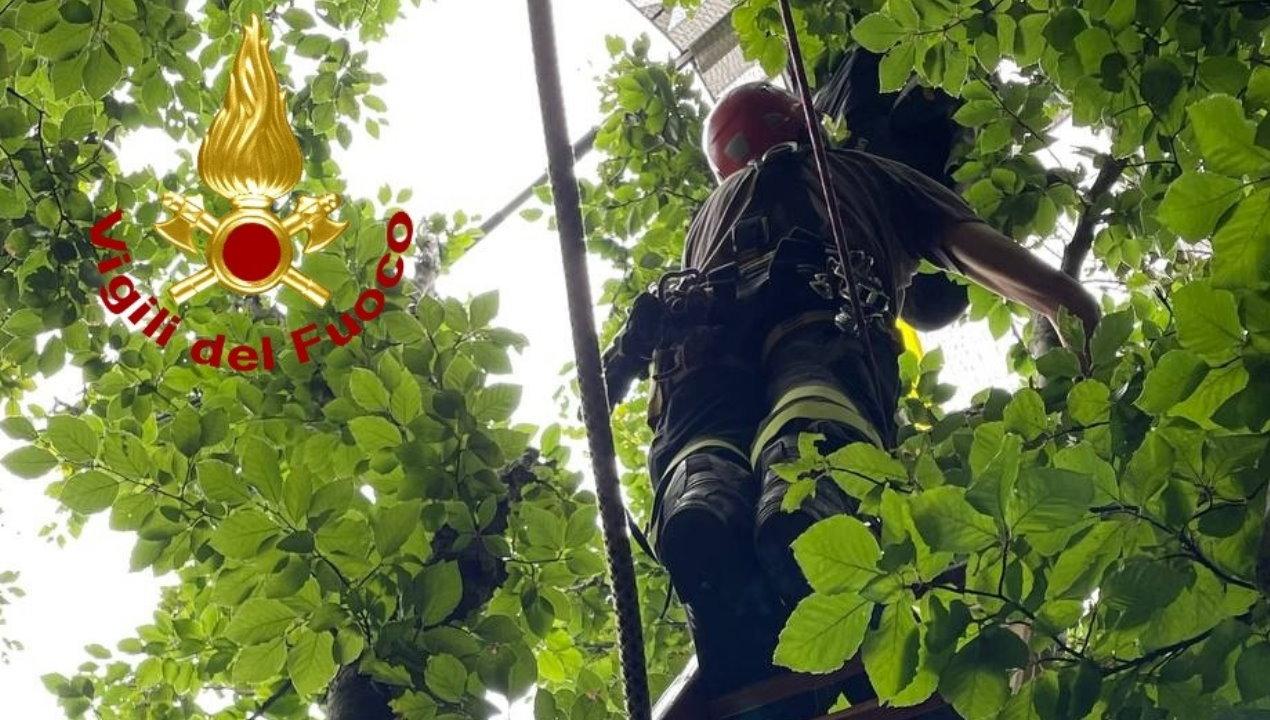 Guardate dove è finito col parapendio, salvato scala Italia e tecniche Saf [galleria fotografica]