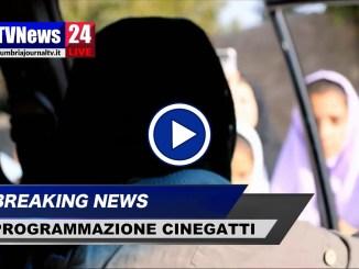 Cinegatti, programmazione dal 29 novembre al 5 dicembre