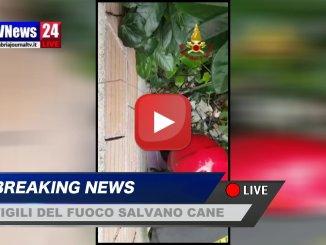 Vigili del fuoco salvano un cane a Nocera Umbra, l'animale sta bene il video