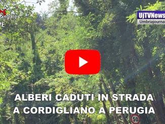 Alberi schiantati in strada a Cordigliano, intervento dei vigili del fuoco
