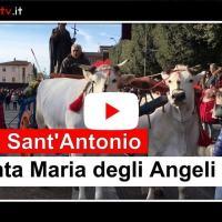 Piatto di Sant'Antonio Abate, Grande partecipazione a Santa Maria degli Angeli