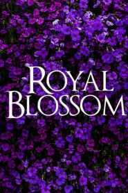 Royal Blossom
