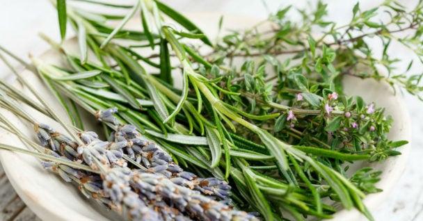 Benefícios do alecrim para a sua saúde e como usá-lo