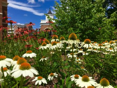Two pollinator gardens on the Fredericksburg campus showcase indigenous plants that encourage bees, butterflies, hummingbirds and other pollinator insects. Photo courtesy of Holly Chichester.