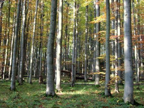 Buchenreiche Laubwälder