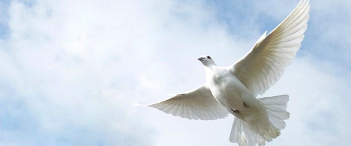 Una paloma lanzada en la ceremonia en conmemoración del Día Internacional de la Paz. Foto ONU/Mark Garten