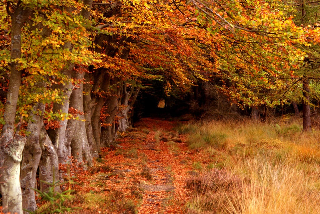 Bosque de Selm Muir, en West Lothian, Escocia. Foto: ONU/Robert Clamp