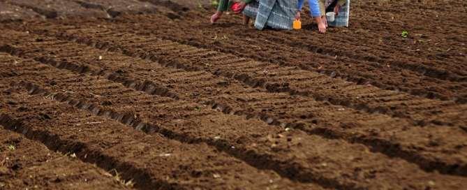 Tres mujeres plantan semillas en una granja en Chimaltenango, en Guatemala. Foto: Banco Mundial/Maria Fleischmann