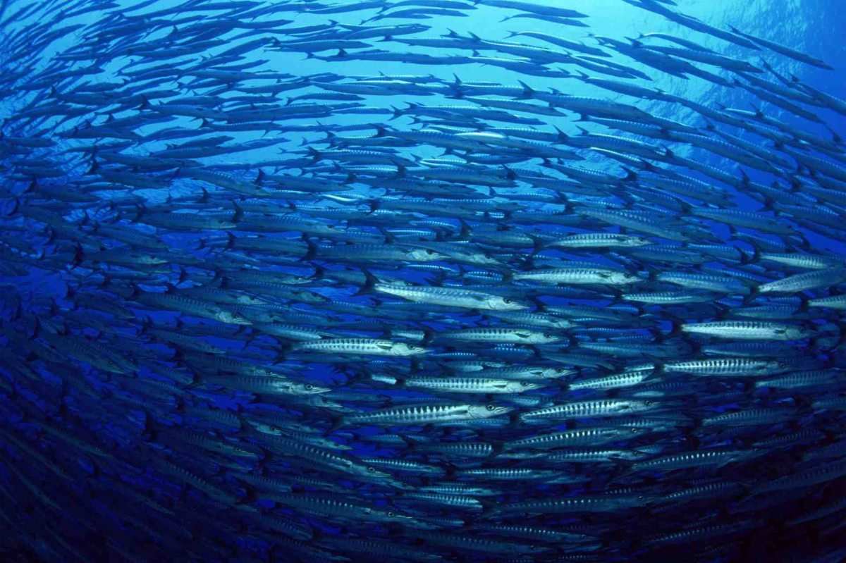 A pesar de que los océanos ocupan más del 70% de la superficie del planeta, sólo conocemos un 5%. Foto: FAO