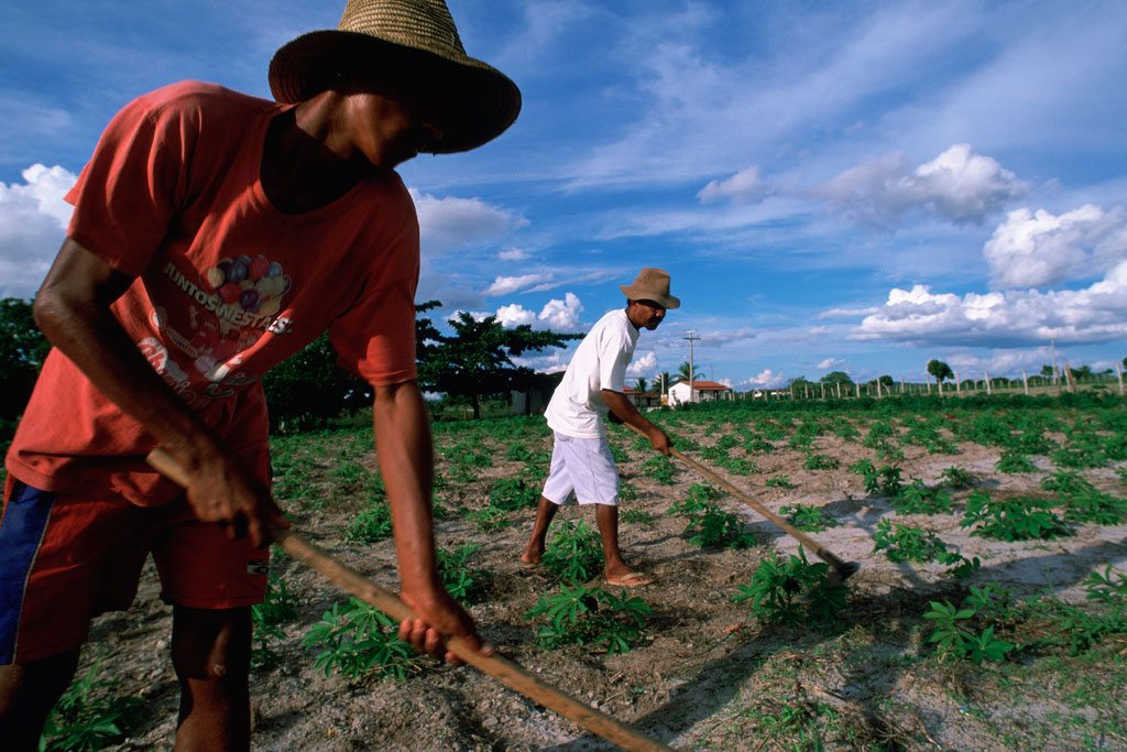 Des ouvriers agricoles travaillant à la culture du manioc dans l'État de Bahia dans le nord-est du Brésil. Photo: Banque mondiale / Scott Wallac