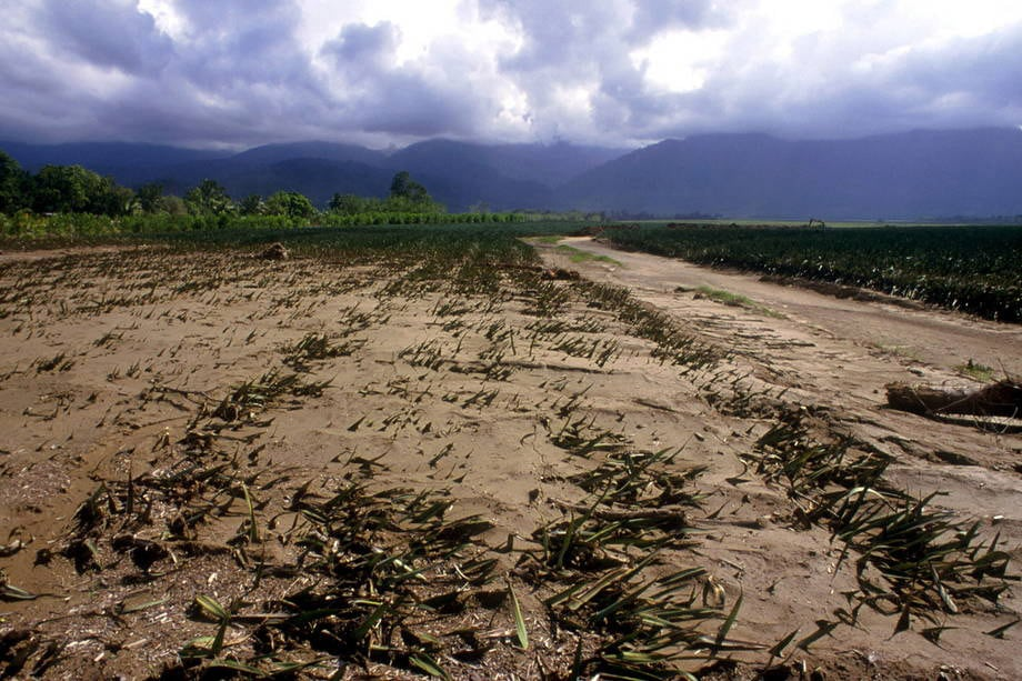 Climate change has serious implications for agriculture and food security