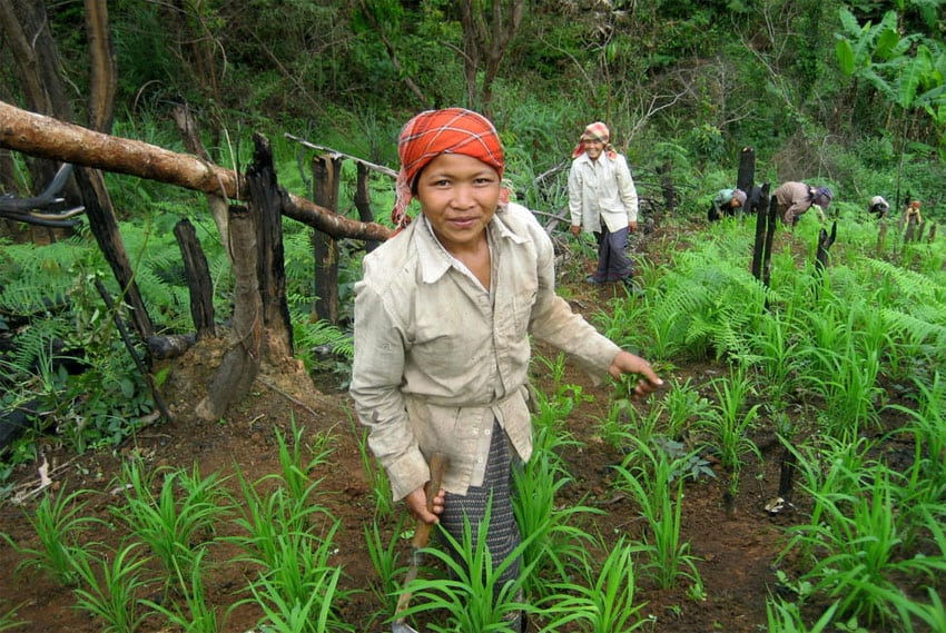 Photo: Upland women weed their rice fields, an integrated method of agro-forestry in Mokpon Village, Laos. UN Photo/Lamphay Inthakoun