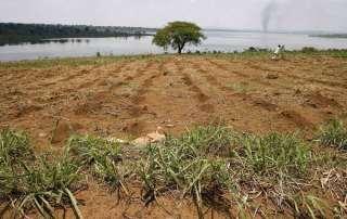 Photo: Farmland along the banks of Rwanda''s Lake Sake.