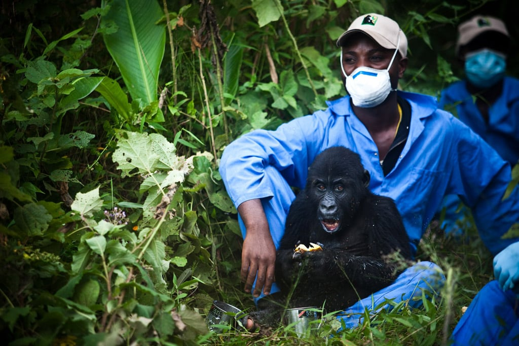 National Geographic Society wins UN environmental prize ...