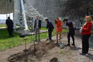 Photo: UN staffers plant a tree in the Food Garden in New York.