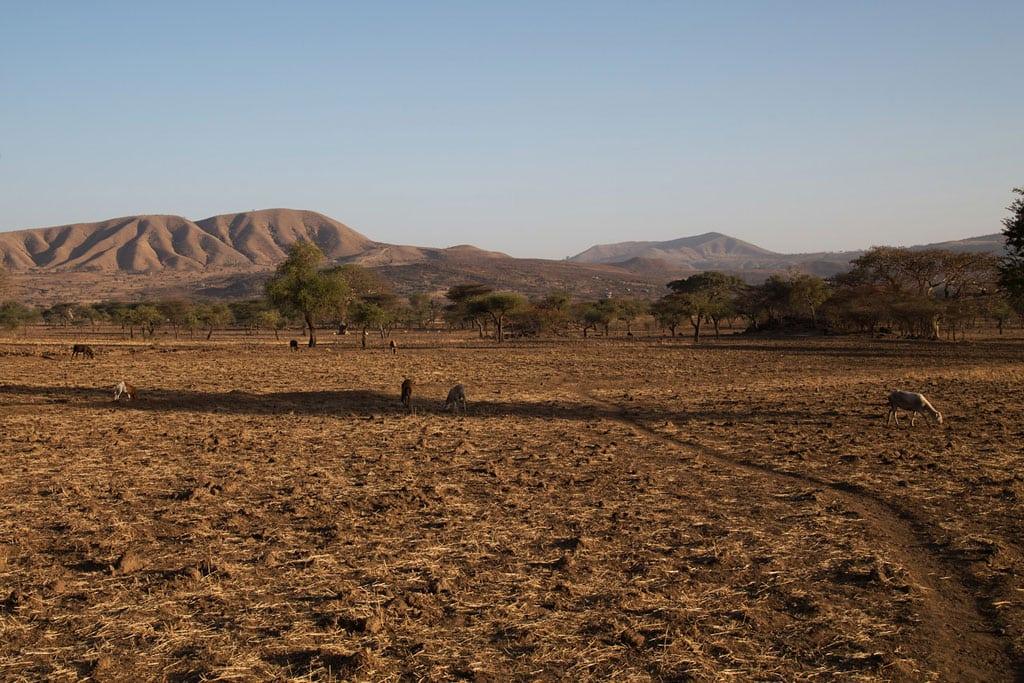 Photo: Drought associated with the El Niño phenomenon has severely affected Arsi, Ethiopia.
