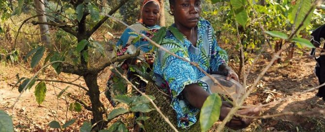 Photo: Agro-forestry farmers tend to their crops in Kigoma, Tanzania. Forests are an integral part of the national agriculture policy with the aim of protecting arable land from erosion and increasing agricultural production. Photo: FAO/Simon Maina