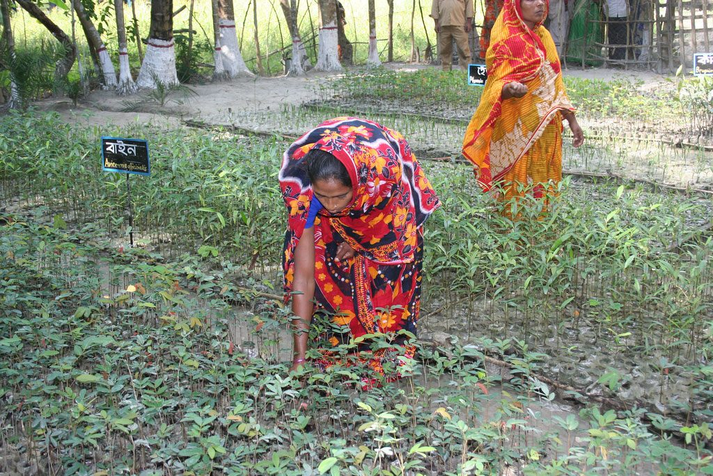 Photo: Women in Char Kukri-Mukri, Bangladesh, tend to mangrove saplings which will be turned into a mangrove forest to protect the eroding coast.