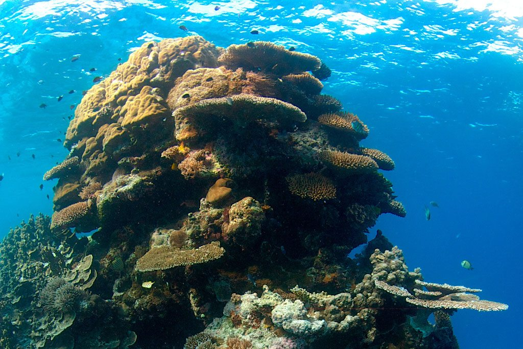 climate change will lead to annual coral bleaching