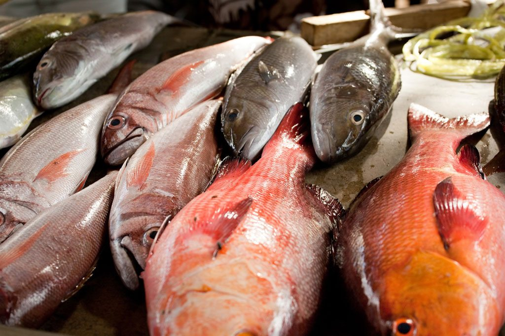 Fish caught in the Seychelles. Photo: UNEP GRID Arendal/Lawrence Hislop