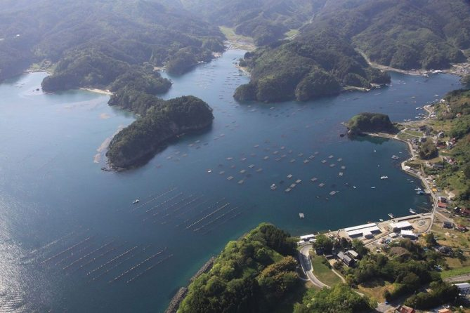 Overview of floating oyster farms in Kesennuma Bay. Photo/Mori wa Umi no Koibito