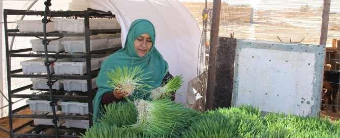 Couresty of: UN World Food Programme
