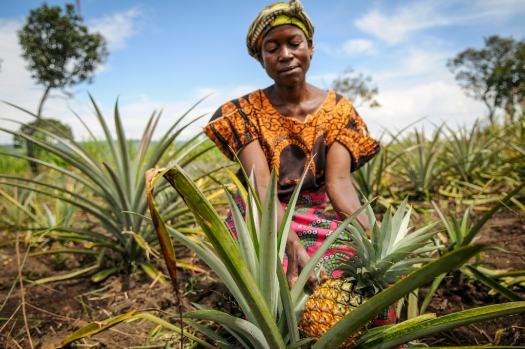 Woman in colourful dress in a pineapple field