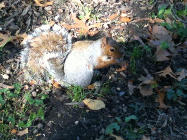 scoiattolo letargo