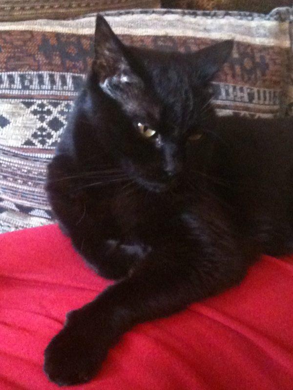 Gatti - Poldo il mio gatto protettore