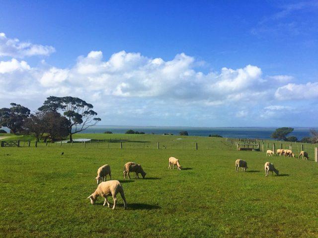 Churcill Island in Australia