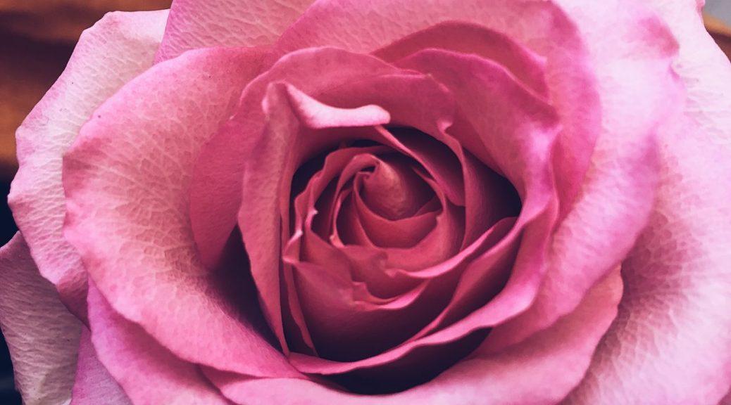 Proprietà rose damascene