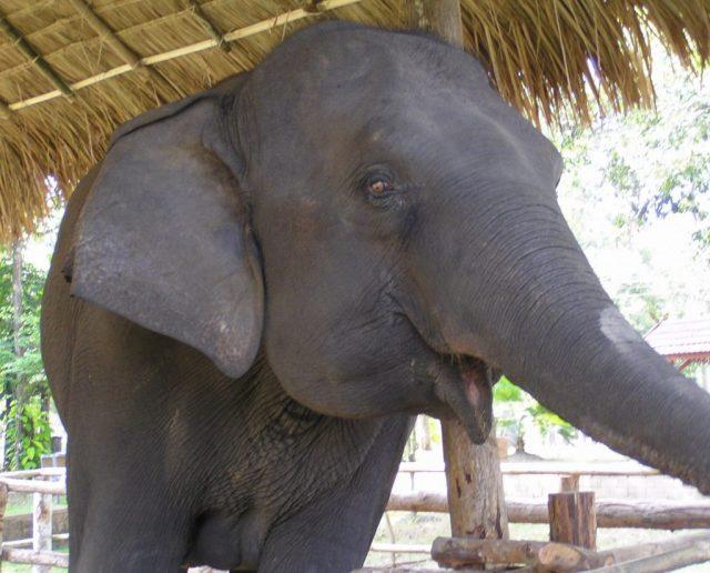 Elefante TECC Chiang Mai